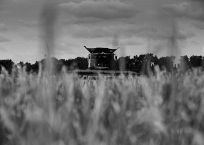 a combine harvester seen through strands of barley in a field.