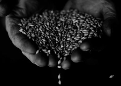 A black and white photograph of barley samples in a famers hands.