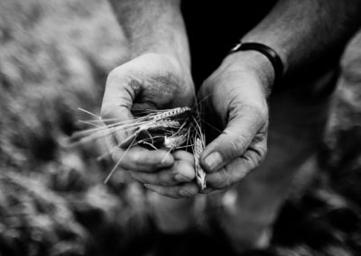 farmer james brown handles some islay barley in a black and white photograph