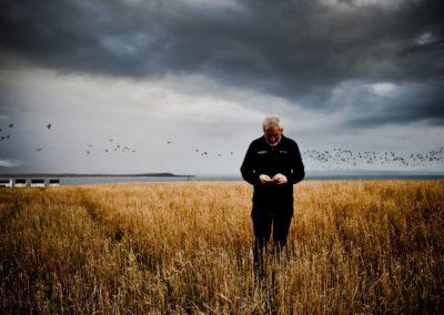 duncan macgillivray of bruichladdich distillery inspects the islay barley harvest